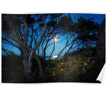 Moonrise, Emerald Beach NSW, Australia Poster