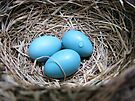 Robin's Nest May 28 2009 by Ron Russell