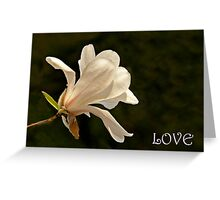Greeting Card- Magnolia Greeting Card