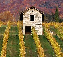 Autumn light in the vineyard by Patrick Morand