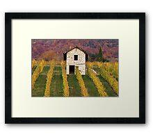Autumn light in the vineyard Framed Print