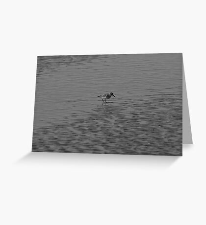 Sandpiper at the beach Greeting Card