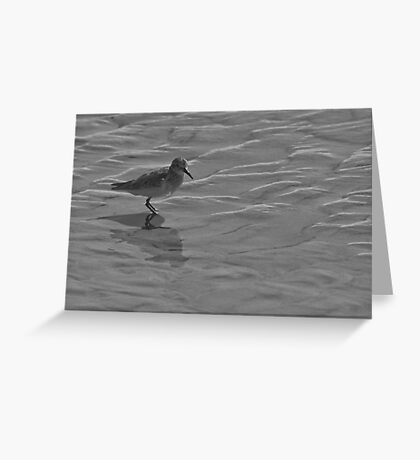 Sandpiper at the beach 3 Greeting Card