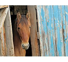 The Kiger Mustang Photographic Print