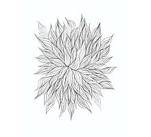 Lovely Lined Leaves Photographic Print