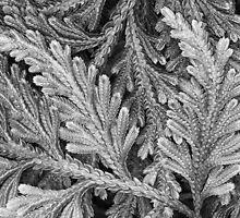 Fern Swirls by Margaret Barry