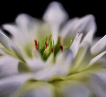 Joyous by photoworksbyjd