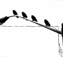 Birds of a Feather by Jacqueline  George
