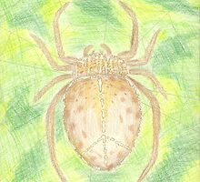 Peacful Spider by nayohme