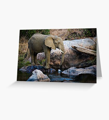 The Watering Hole Greeting Card