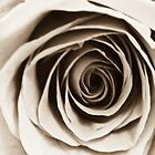 Antique Rose by ADAMAS