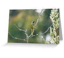 Yellow throated honey eater Greeting Card