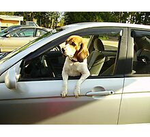 I Wanna Go for a Ride Photographic Print