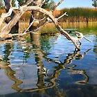 Dead Trees in the water. Aurora reservoir. Colorado. #6 by Anatoly Lerner