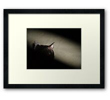 Matrix Kitty Framed Print