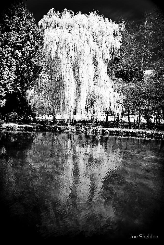 The Willow by Joe Sheldon