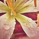 loving the rain by Jamie McCall
