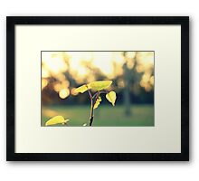 to touch the little stars Framed Print