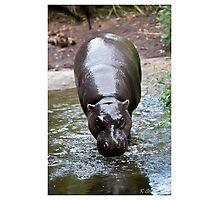 Running hippo Photographic Print