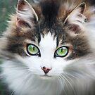 Eye Contact by Ticker