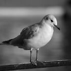 Thinking Seagull by AGlassenbury