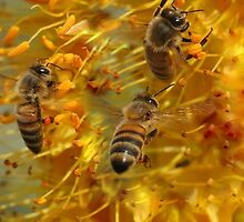 POPULAR HANGOUT FOR THE BEES by Betsy  Seeton