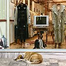 The fur shop by Matt Mawson