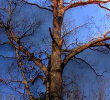 Tree Mapped Skies by Okeesworld