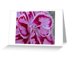 Two tone flower  Greeting Card