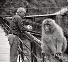Common ground, opposing points of view. Snow Monkeys by Norman Repacholi