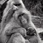 Work, play and stay together. Snow Monkeys by Norman Repacholi