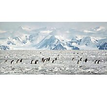 Penguin Highway Photographic Print