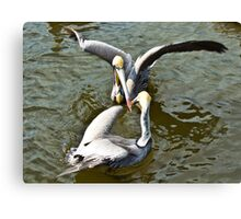 Pelican fight Canvas Print