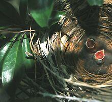 Baby Cardinals! by Douglas  Alan