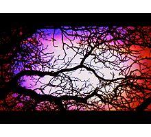 Neuron Photographic Print