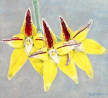 Cowslip Orchid (Caladenia flava) by PaulM
