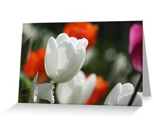 Multicolored tulips Greeting Card