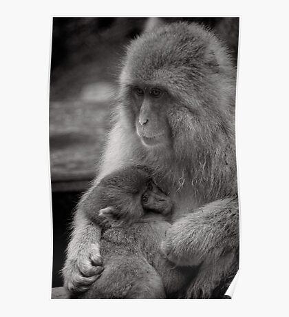 I just needed a hug. Snow Monkeys Poster