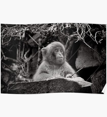 The diligent student. Snow Monkeys Poster
