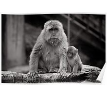 Watch and learn little one. Snow Monkeys Poster