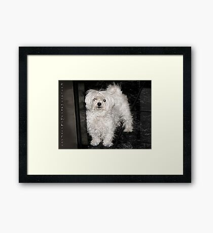 Rescues make the best pets... Framed Print