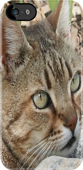 Tabby Cat Portrait by taiche