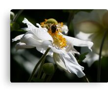 Feast in a Flower Canvas Print