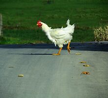Why Did the Chicken Cross the Road? by Nevermind the Camera Photography