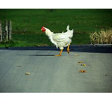 Why Did the Chicken Cross the Road? Photographic Print