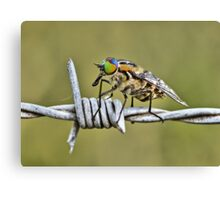 """Hello Fly"" Canvas Print"