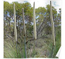 4. Mallee Forest and Wild Flowers Poster