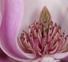 spring diadem by yvesrossetti