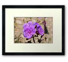 Flower test shot EOS 600D Canon  Framed Print
