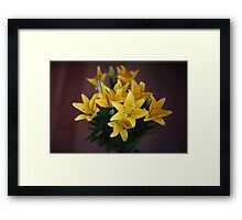 lily flowers on a black background  Framed Print